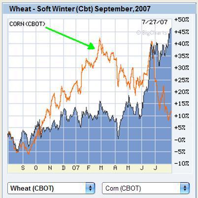 pšenica i kukur.